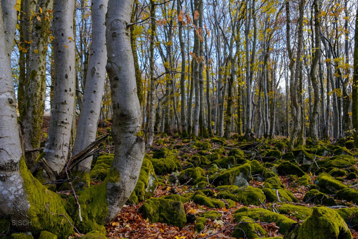 Natur … ohne Mensch