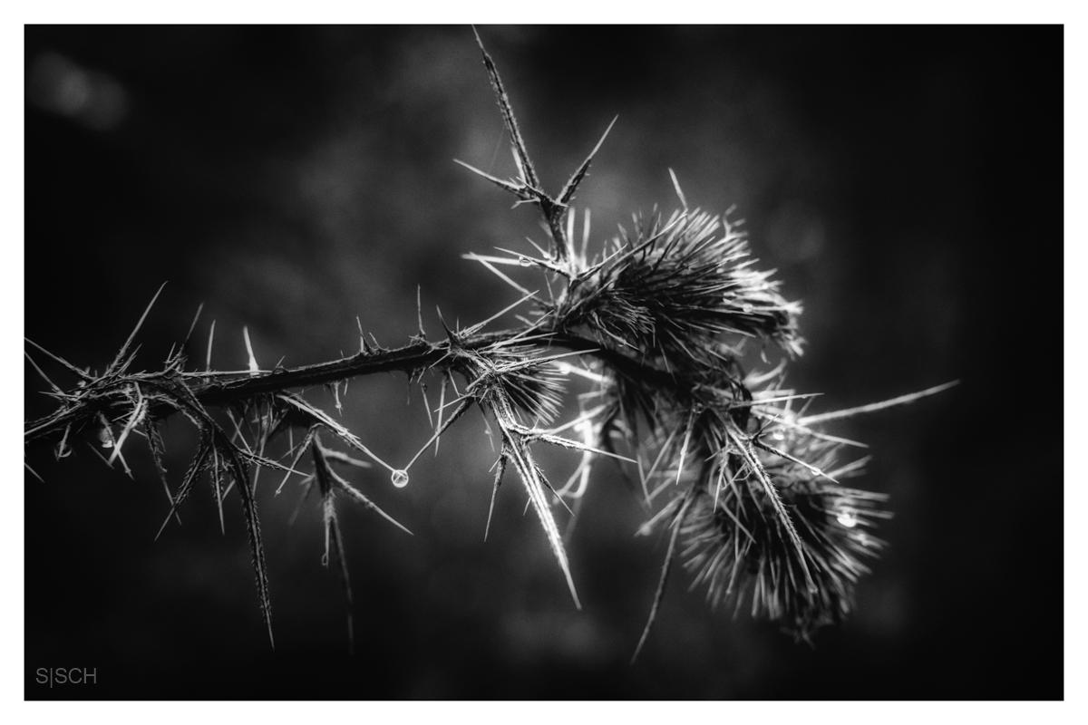 Winterstimmung in Schwarz-Weiß